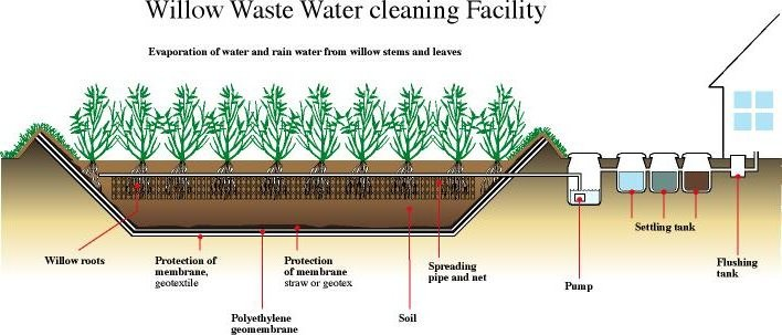 how to create natural water treatment wetlands